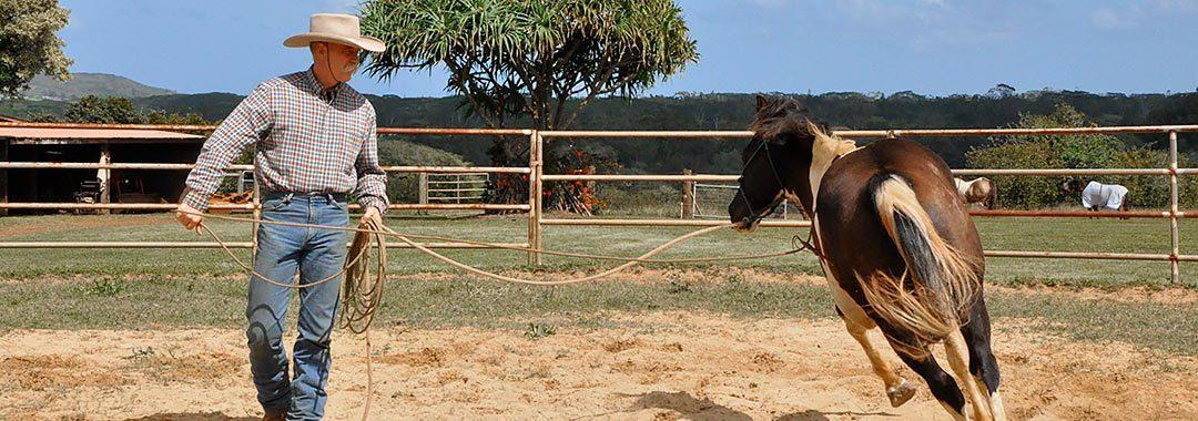 Training Horse